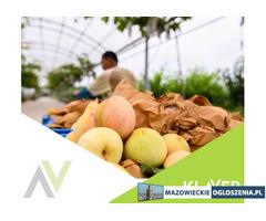 Od zaraz! praca przy owocach i warzywach! – Holandia